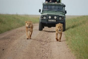 Planing an African Safari