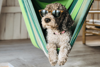 Safe Travel with Dogs or Cats